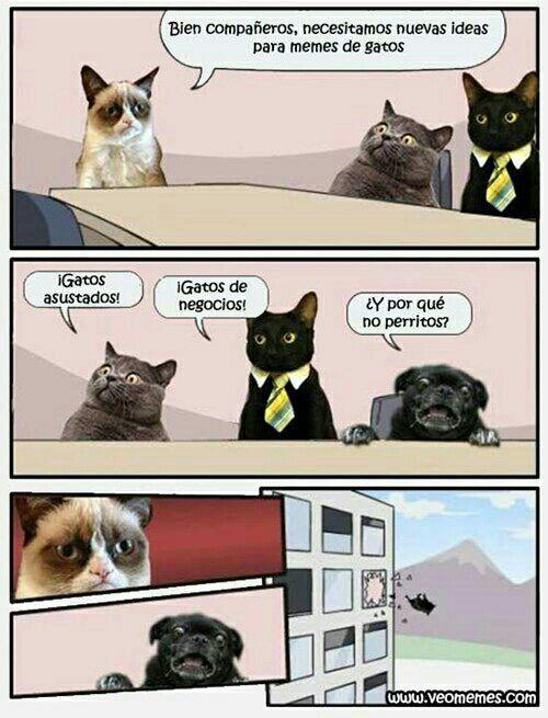 M E S A L V A R O N Au S Sans X Tu Meme Gato Gatos Cool Perros Tontos