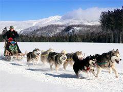 Dog Sledding in Mont Tremblant, Quebec