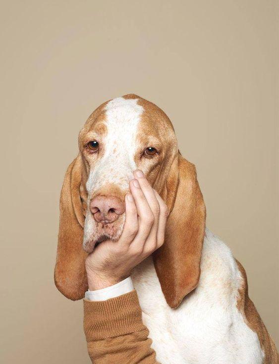 頬杖をつくおしゃれでかっこいい犬の壁紙