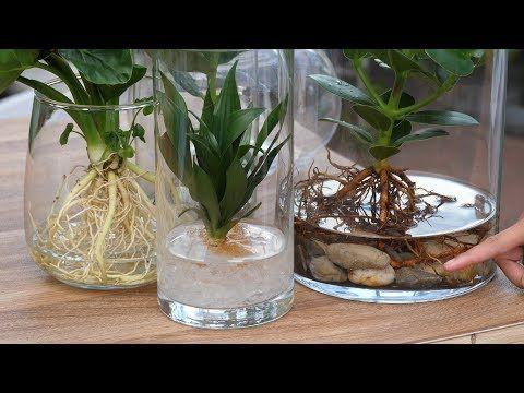 Diy Neuer Trend Hydroponie Pflanzen Ohne Erde Im Glas Youtube Pflanzen Ohne Erde Hydrokultur Pflanzen Pflanzen