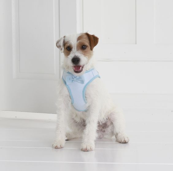 This adorable seersucker harness (with bow tie) is perfect for this weekend's #KentuckyDerby! Shop more #MarthaStewartPets looks at #PetSmart!