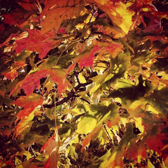 Fall<3