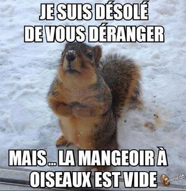ecureuil image drole