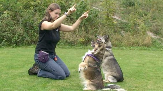 Pet ownership is a trait possessed by very many people. There are those that keep pets because they love them while there are others that own pets for the sole