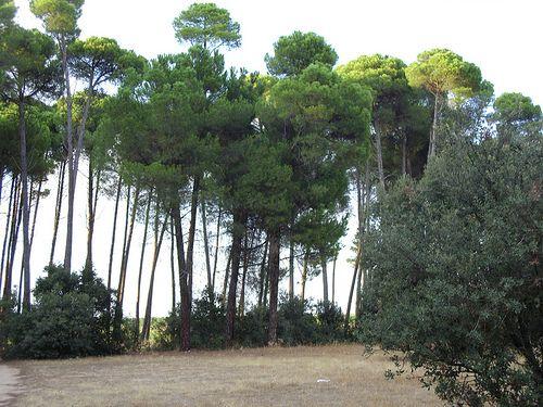 SDC10577, Nature, Pinar Vadohondo, Tinajas, Bodega D.Martín (Villarrobledo, Albacete, España, 7-14 Septiembre, 2013).