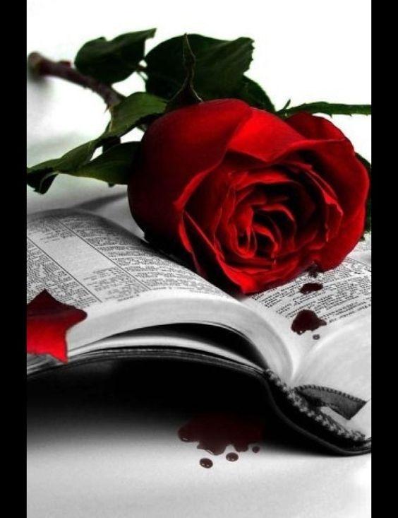 Red rose and Bible