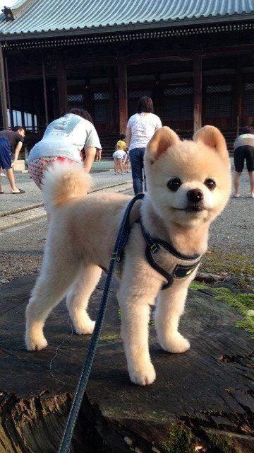 cutest dog on earth, or close