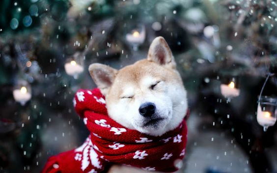 """Campaña contra la Traqueobronquitis Infecciosa """"Gripe Canina"""" - VETSALOU:"""