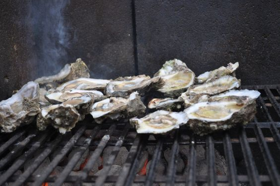 Oysters on the Barbee