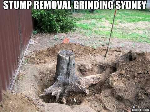 Tree Stump Removal Stump Grinding In Parramatta Penrith