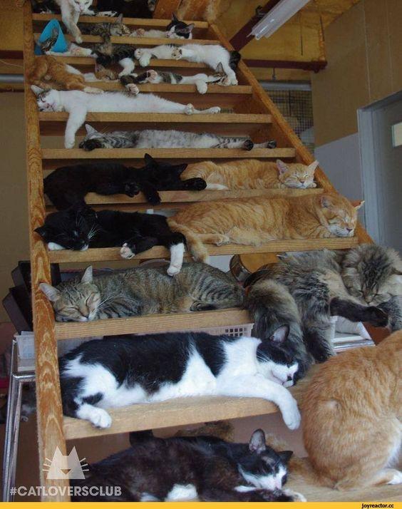 AStuce soigner sont chat naturelle 674c0e7c1afca72c01ff5691f24183ba