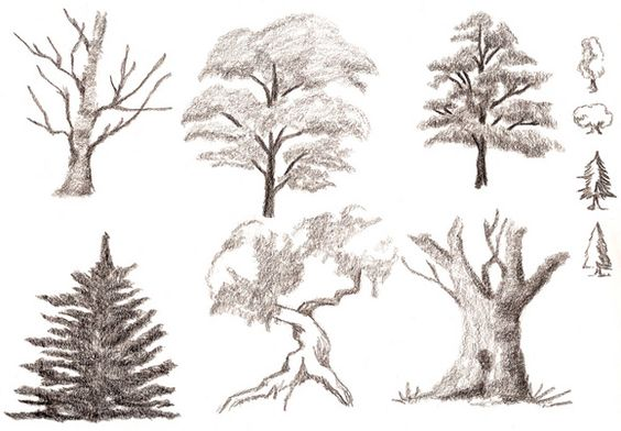 trees types - Cerca con Google