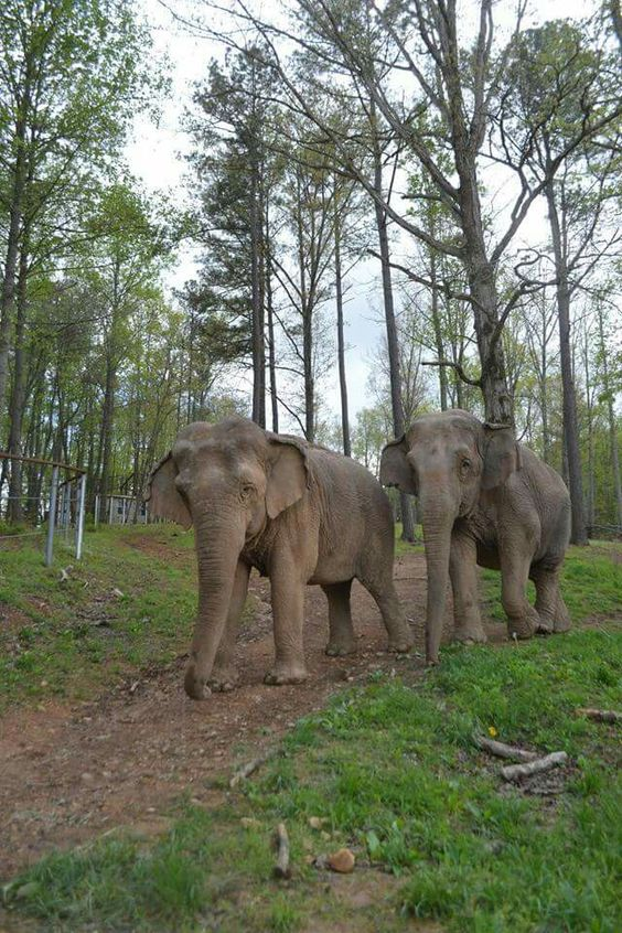 Elephant sanctuary research paper