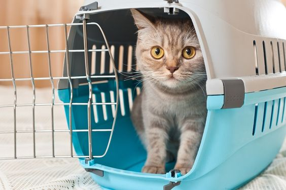Take the Advantage of Cat Boarding while Travelling