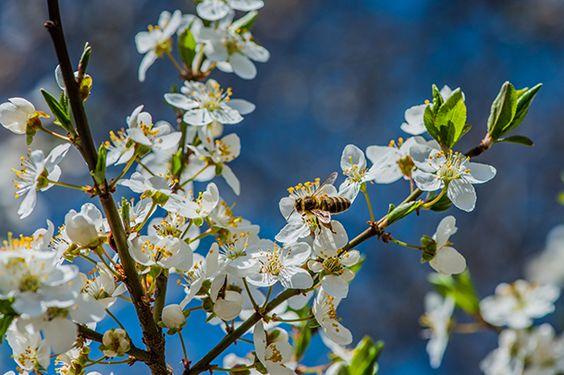 #Herbal Remedies to Combat #Allergy Symptoms   #OrganicSpaMagazine