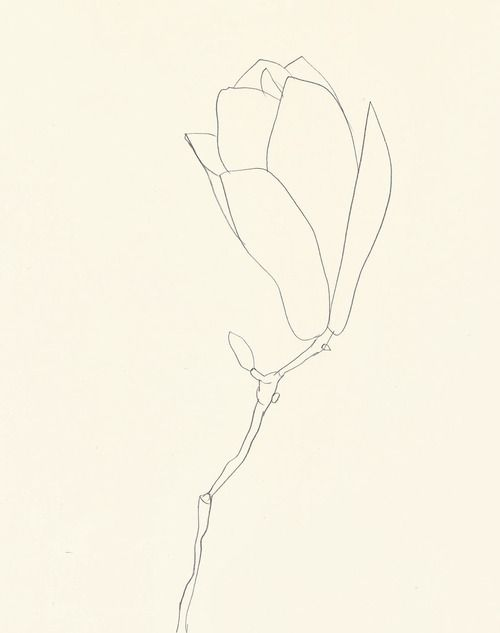 NOT SHAKING THE GRASS - Ellsworth Kelly-Plant Drawings (1960-91) 1....