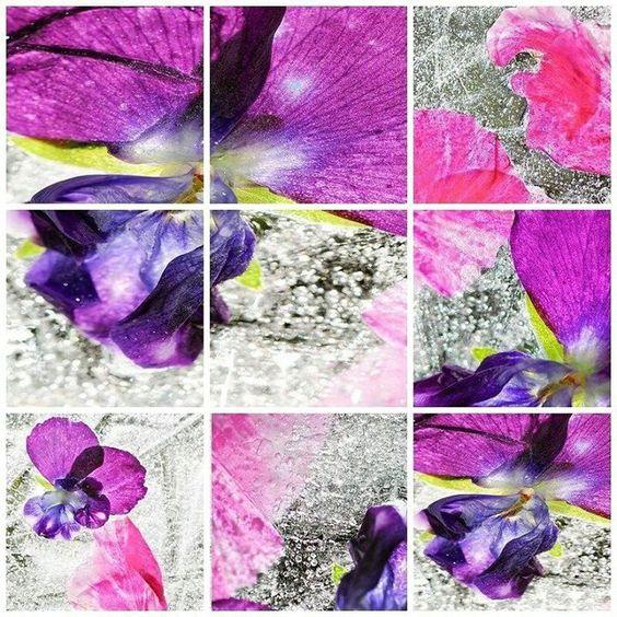 """Série """"Fleurs en plaques de glace brillées par la soleil"""" réalisée par Indiwidual_Mary dans le cadre de la mission Contre-Jour. Le violet électrique des fleurs s'accorde parfaitement à la brillance et à la transparence de la glace. Encore une très belle série végétale et expérimentale d'Indiwidual_Mary. Participez gratuitement au Prologue du #ChampionnatDeFranceDePhoto2016 et prenez une longueur d'avance dans la compétition. Relevez de nouveaux défis créatifs avec les Missions thématiques et…"""