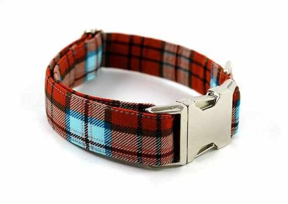 Bow Wow Couture Dog Collar in The Cambridge available at www.ZoePetSupply.com
