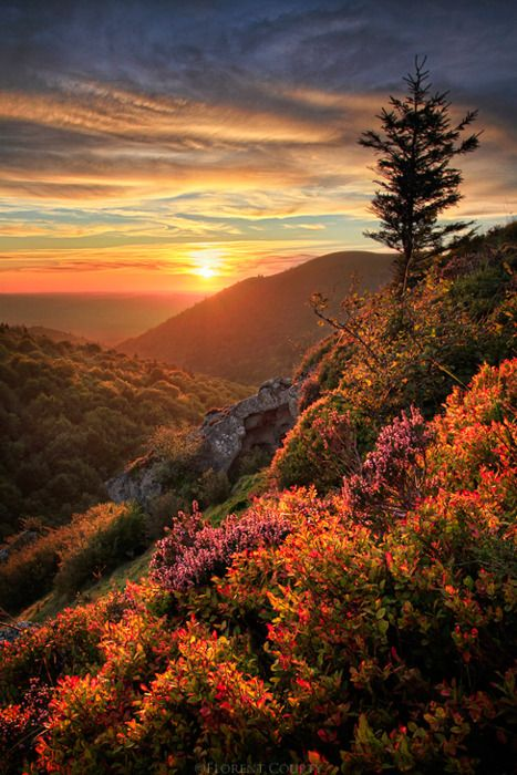 Mountainous flower and vegetation filled sunrise.  Referenced by WHW1.com: Business Hosting - Affordable, Reliable, Fast, Easy, Advanced, and Complete.©