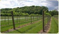 El Wabash Valley Wine Trail une cinco viñedos localizados en la parte sureste del estado. Los visitantes pueden disfrutar de la vista escénica del Wabash River Valley y gozar de los sitios históricos como Lincoln y George Rogers Clark Memorials.