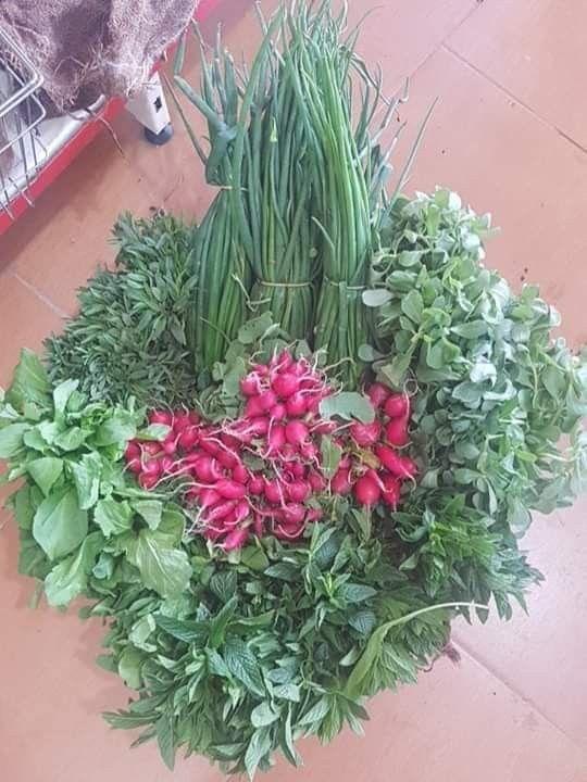 فجل نعنع زعتر بري فرفحين Plants