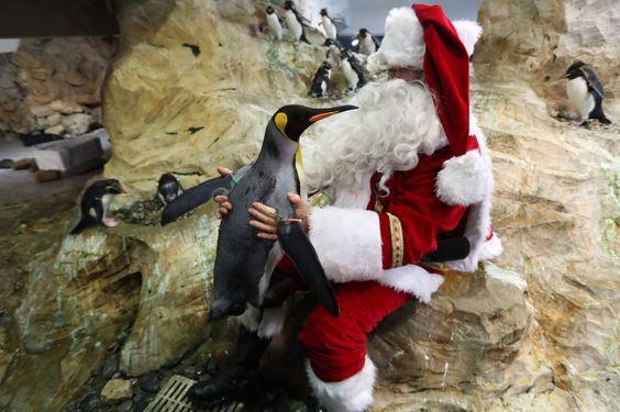 Un hombre vestido de Santa Claus posa con un pingüino el 21 de diciembre de 2016 en el parque temático de Marineland en Antibes, sureste de Francia. / AFP PHOTO / VALERY HACHE