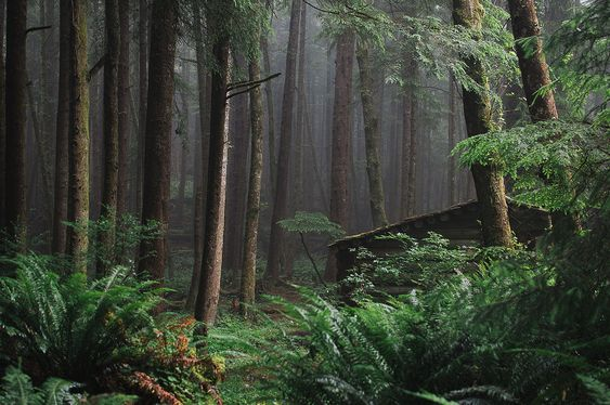 Oregon is home to some of the most beautiful forests in the world.