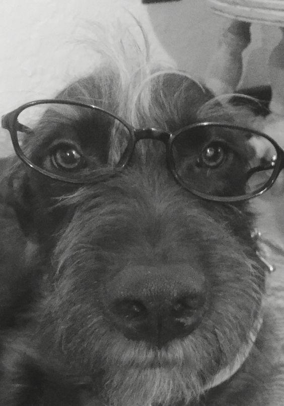 Hannah the hipster! ❤️