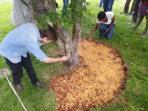 Making A Wood Chip Mushroom Garden « Milkwood 400 x 300