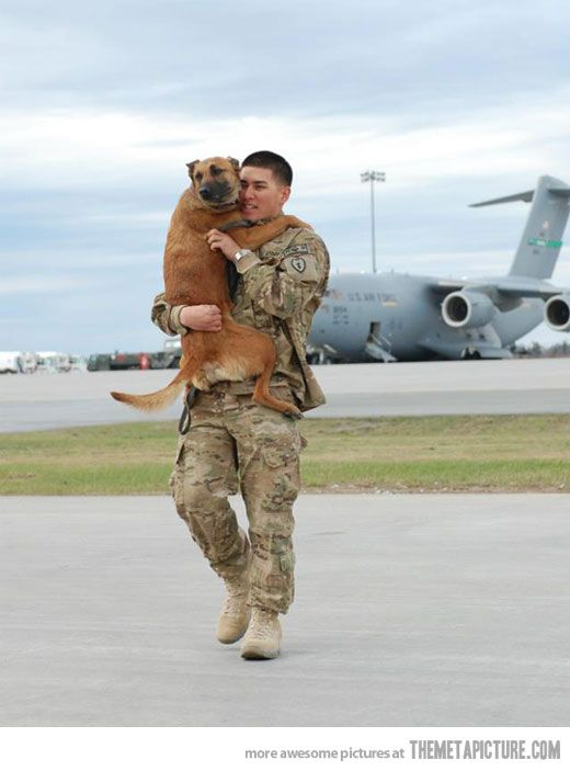 Welcome home, dad... Dogs reaction to soldier coming home