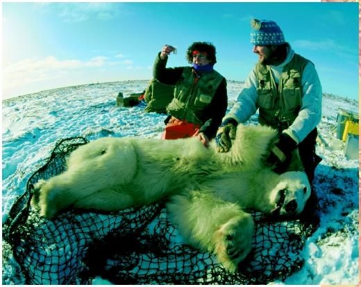 Wildlife Biology--want to live with the polar bears!!) Wildlife - sample wildlife biologist resume