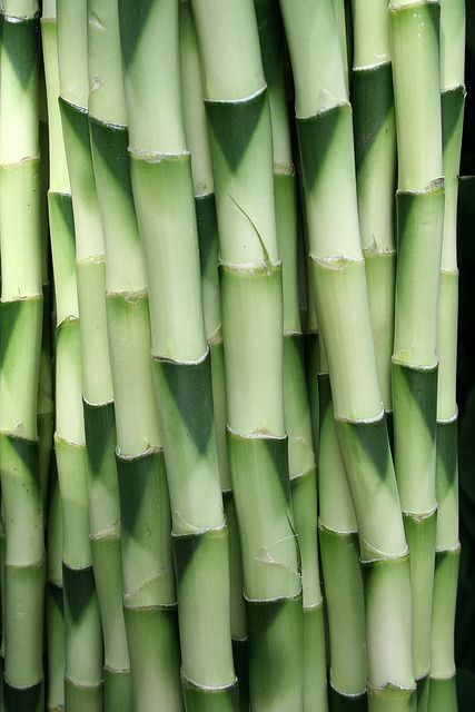 ~~ bamboo close up by omnia* ~~