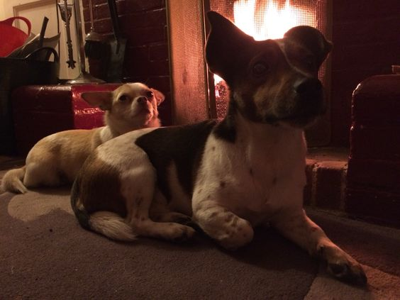 Pals warming by the fire