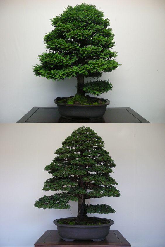 檜・Hinoki cypress : Styled by N.M.