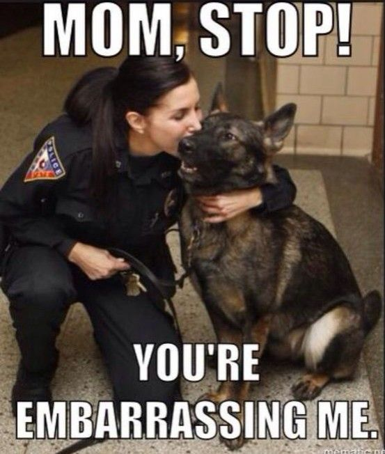 Pin By Tanya Pullum On Law Enforcement Humor Funny Dog Memes Funny Dogs Funny Animal Jokes