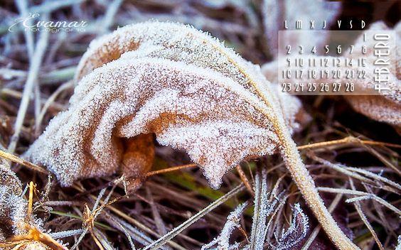 Evamar Fotografía: Empieza febrero + calendario gratis!!!