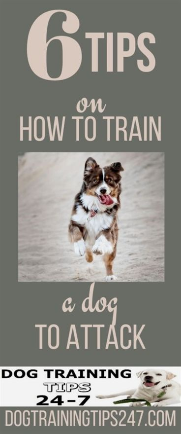 Pin On Dog Training Book