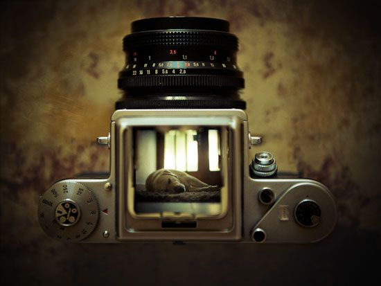 my <3 Still Life Photography