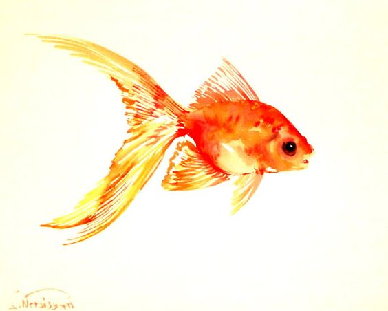 Goldfish, original watercolor painting, 8 X 10 in ...