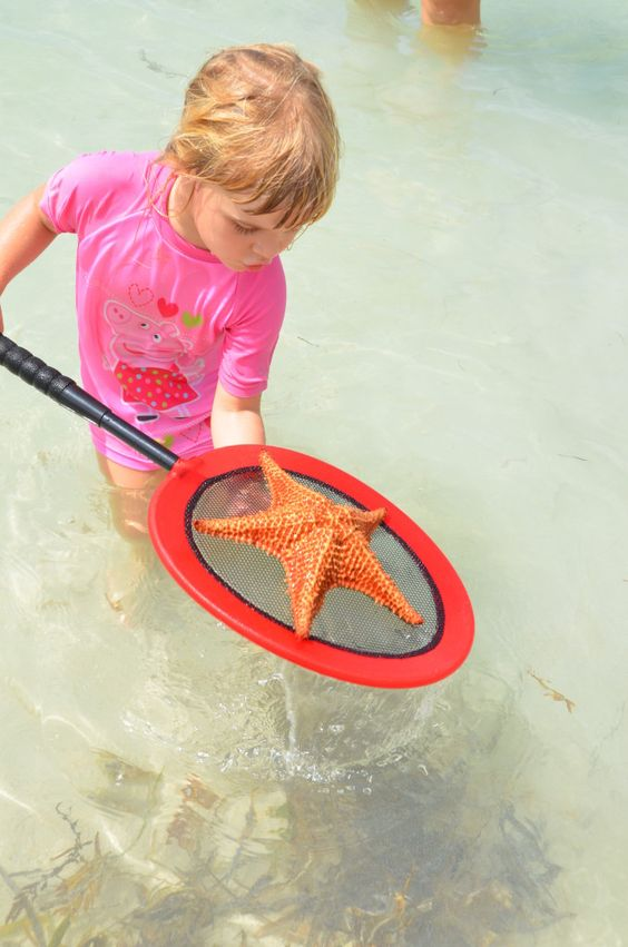 Starfish Point in Grand Cayman is a great place for kids and families, offering beautiful shallow waters, a variety of sea life and soldier crabs and plenty of space for everyone.