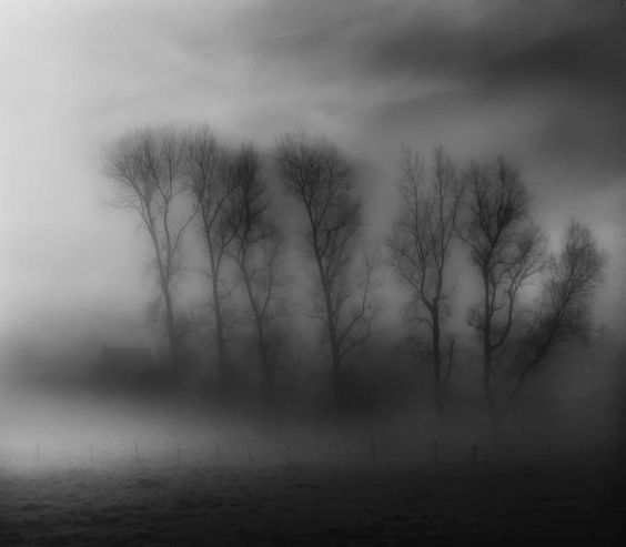 A shade of grey  By Photoma's World  Yvette Depaepe
