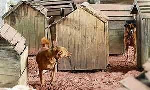"""""""O Grito do Bicho"""": ONG é despejada e leva cachorros para área embaixo..."""