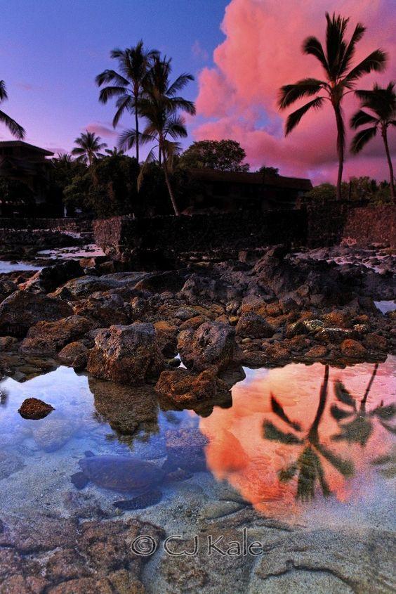 Photograph Hidden turtle by Cj Kale on 500px
