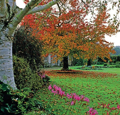 Soliterni Dreviny Do Zahrad Beautiful Nature Plants Nature