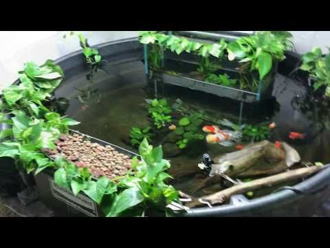 1 300 Gallon Indoor Pond Project Faq S Answered Youtube Indoor Pond Aquaponics Pond