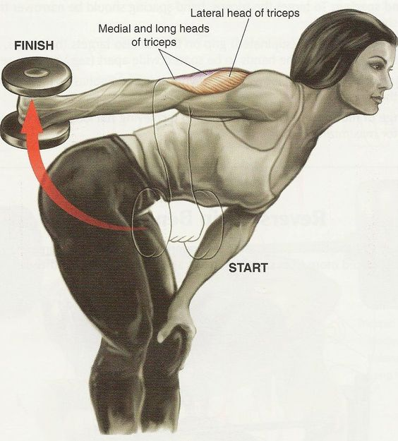 Workout, Back workouts and Muscle on Pinterest