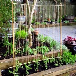 This simple trellis for climbing plants is a great way to get the kids involved in the vegetable garden.