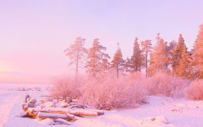 Pink sunset light over snowy forest 1920x1200 HD Desktop Wallpaper