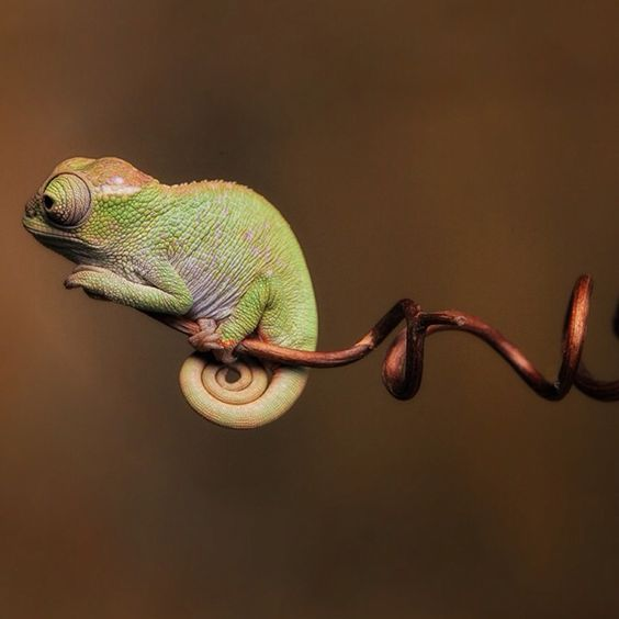 name cute chameleon - photo #3