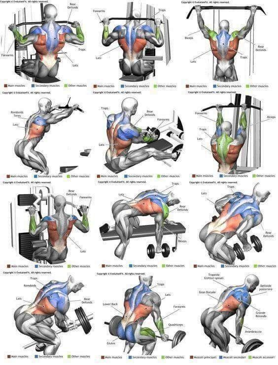 Pin By Isaiah Garza On Fitness Best Chest Workout Chest Workouts Gym Workouts